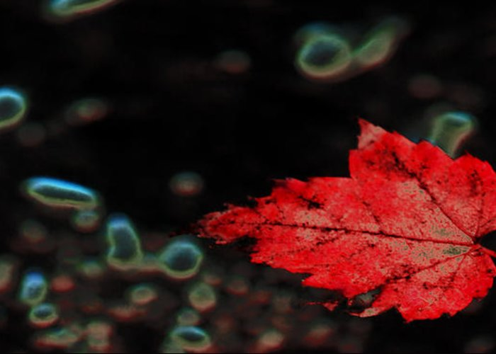 Red Leaf Greeting Card featuring the photograph Frozen Red Leaf by Optical Playground By MP Ray