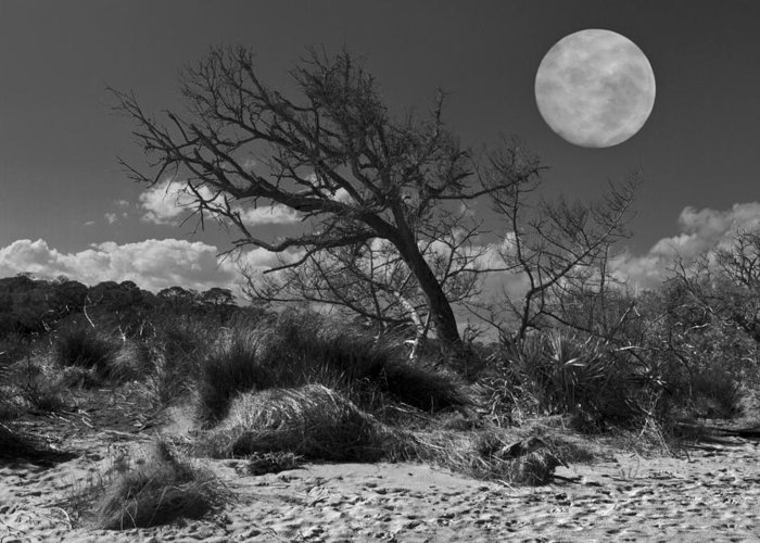Fine Greeting Card featuring the photograph Full Moon Over Jekyll by Debra and Dave Vanderlaan