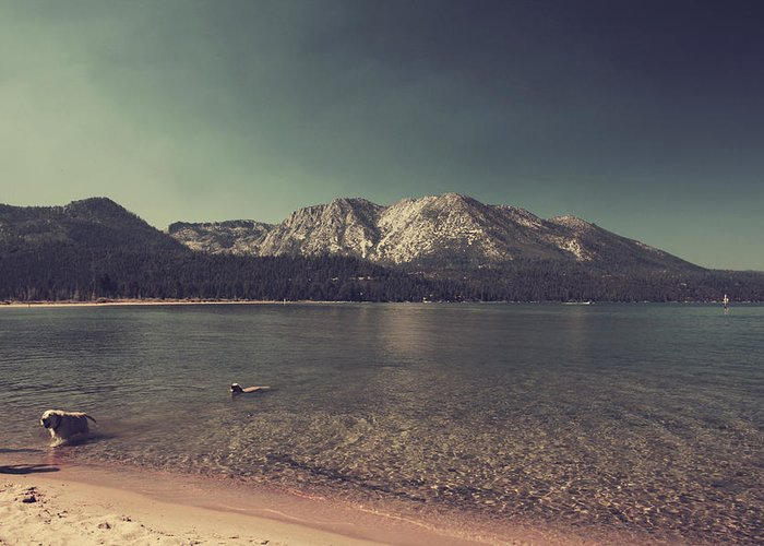 Lake Tahoe Greeting Card featuring the photograph Fun At The Lake by Laurie Search