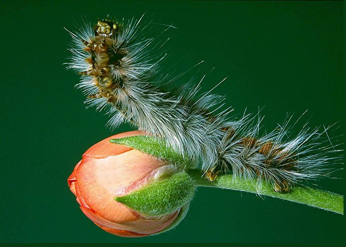 Caterpillar Greeting Card featuring the photograph Furry Caterpillar by Patricia Tapping