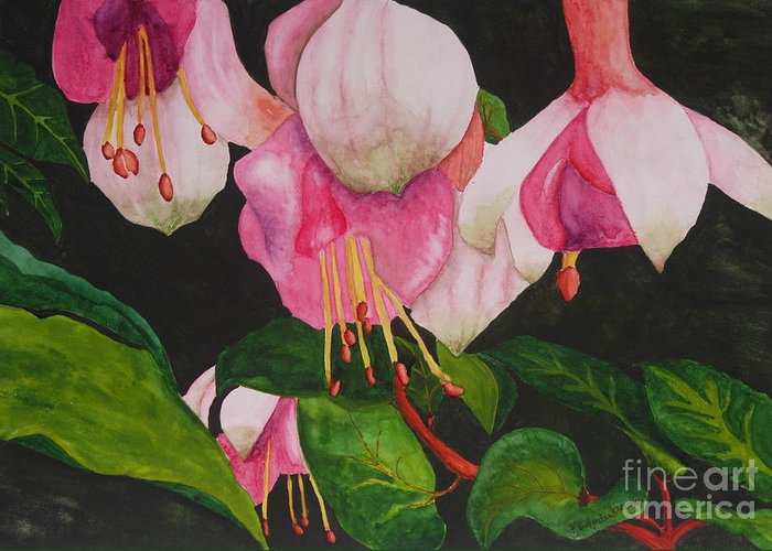Fuschia Flower Greeting Card featuring the painting Fuschia Pink Passion by Kimberlee Weisker