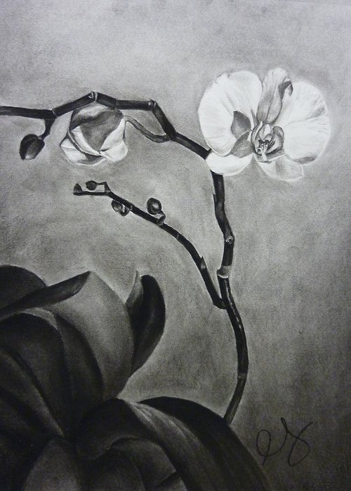 Orchid Greeting Card featuring the drawing Galen's Orchid by Estephy Sabin Figueroa