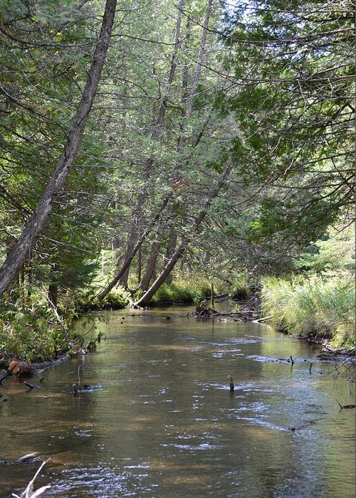 Creeks Greeting Card featuring the photograph Gamble Creek by Jennifer King