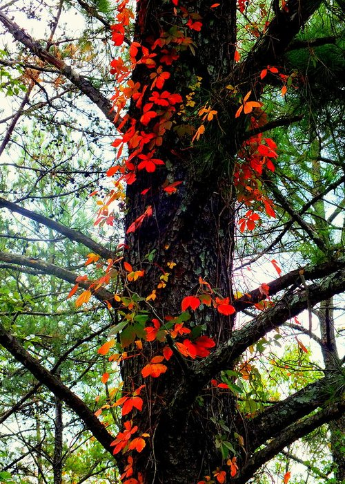 Autumn Greeting Card featuring the photograph Garland Of Autumn by Karen Wiles
