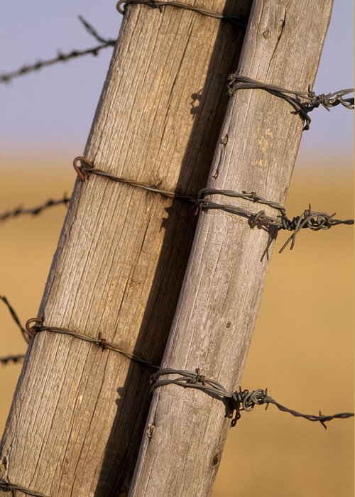 Outdoor Greeting Card featuring the photograph Gate Posts Join A Barbed Wire Fence by Gordon Wiltsie