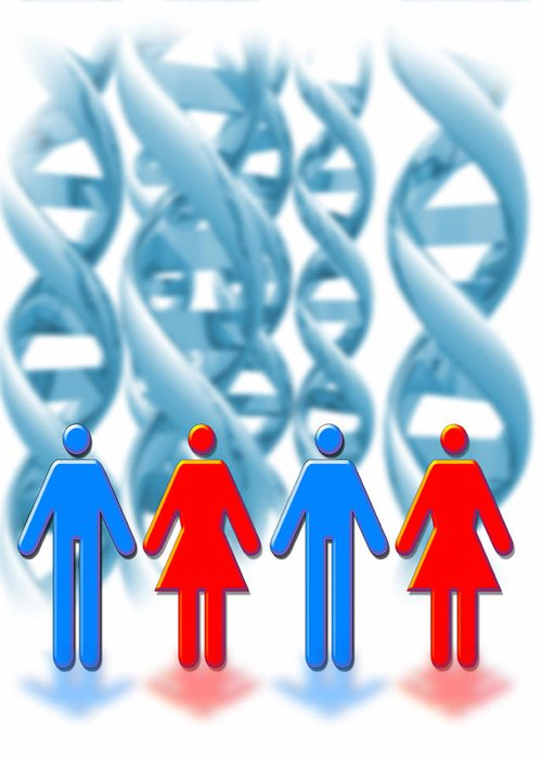 Lifestyle Greeting Card featuring the photograph Genetic Sexuality by Victor Habbick Visions