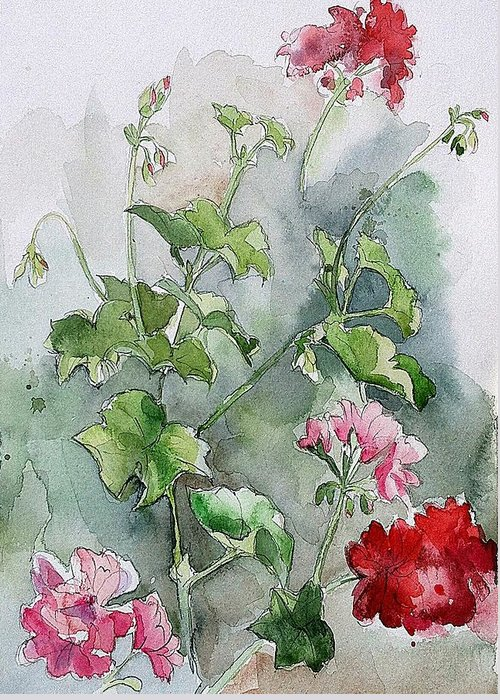 Watercolour Greeting Card featuring the painting Geraniums by Stephanie Aarons
