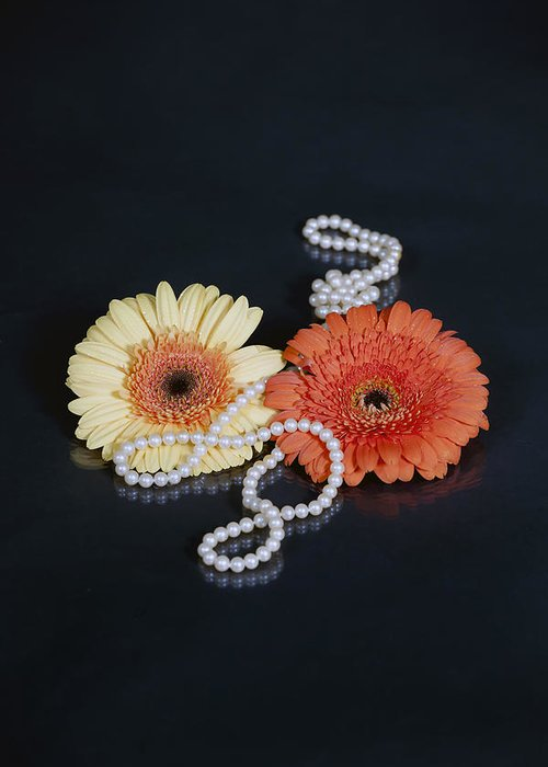 Gerbera Greeting Card featuring the photograph Gerberas With Pearls by Joana Kruse