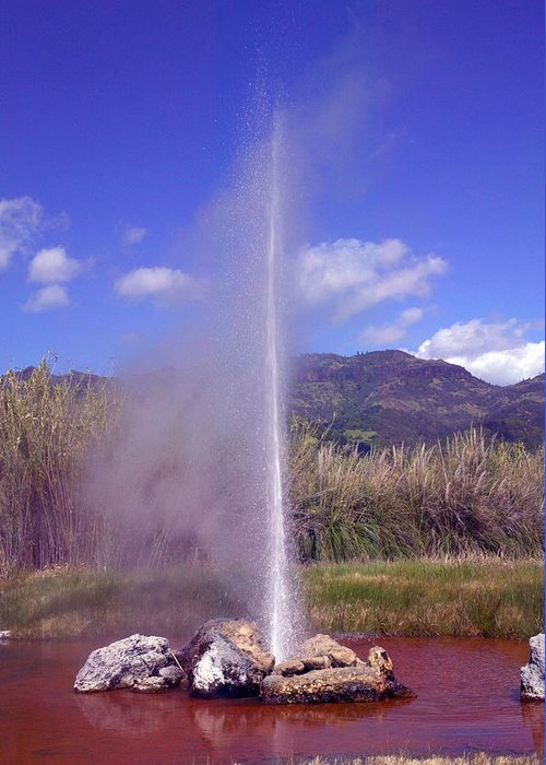 Geyser Greeting Card featuring the photograph Geyser Calistoga by Garry Gay