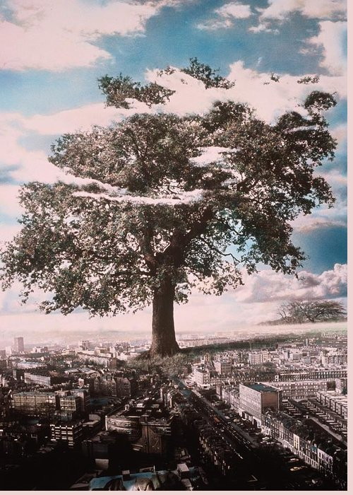Giant Tree In City Greeting Card featuring the photograph Giant Tree In City by Hag