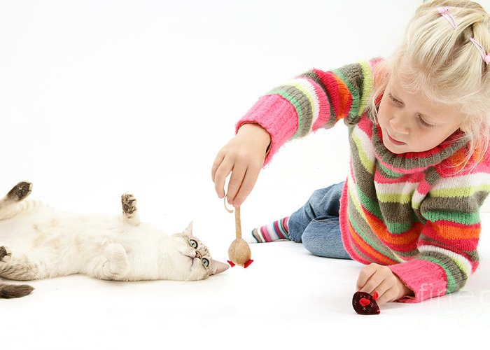 Animal Greeting Card featuring the photograph Girl Playing With Cat by Mark Taylor