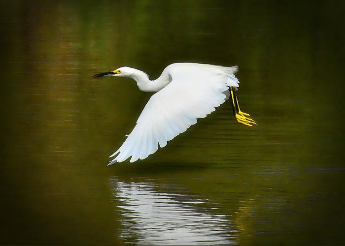 Great Egret Greeting Card featuring the photograph Glide On By by Saija Lehtonen