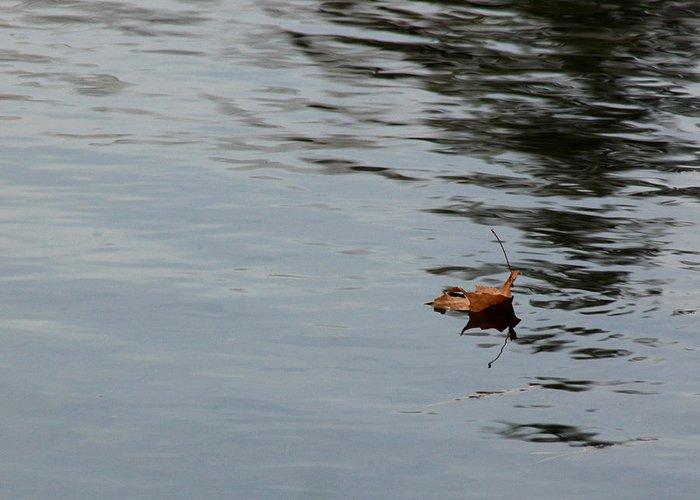 Usa Greeting Card featuring the photograph Gliding Across The Pond by LeeAnn McLaneGoetz McLaneGoetzStudioLLCcom
