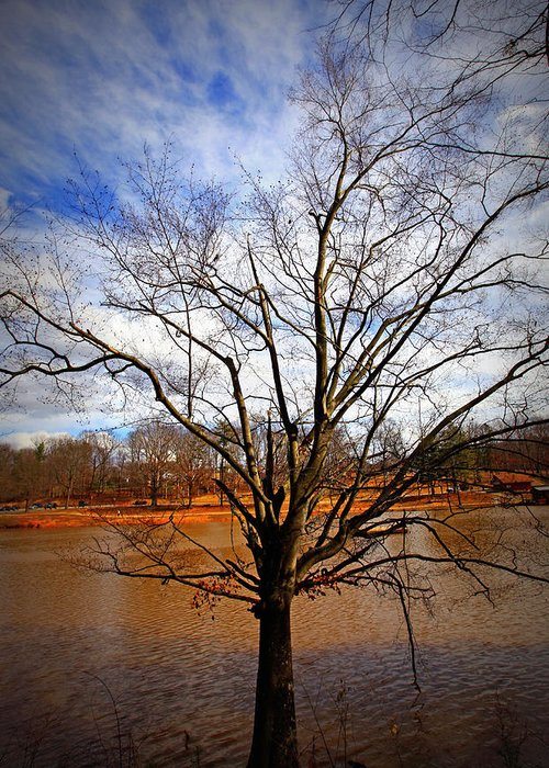 Tree Greeting Card featuring the photograph Glorious Tree by Sheila Kay McIntyre