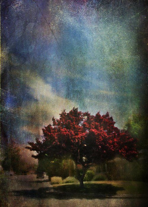 Tree Greeting Card featuring the photograph Glory by Laurie Search