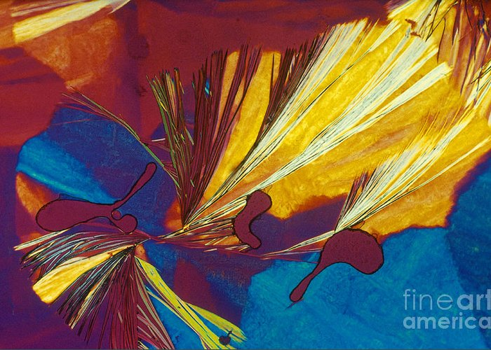 Polarized Light Micrograph Greeting Card featuring the photograph Glycine by Michael W. Davidson