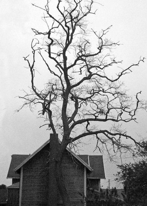 Tree Greeting Card featuring the photograph Gnarled by Pamela Patch