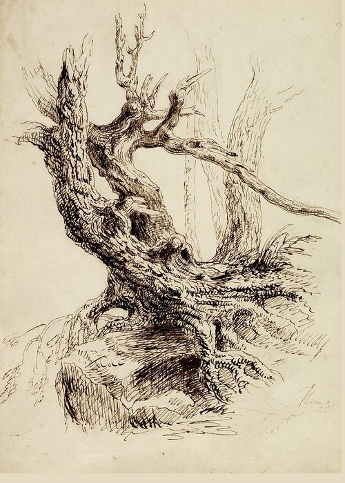 Gnarled Greeting Card featuring the drawing Gnarled Tree Trunk by Thomas Cole