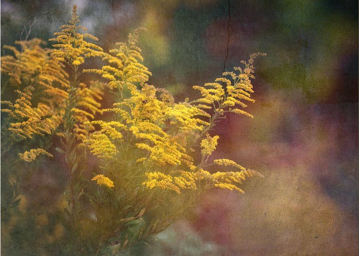 Floral Greeting Card featuring the photograph Golden by Brenda Bryant
