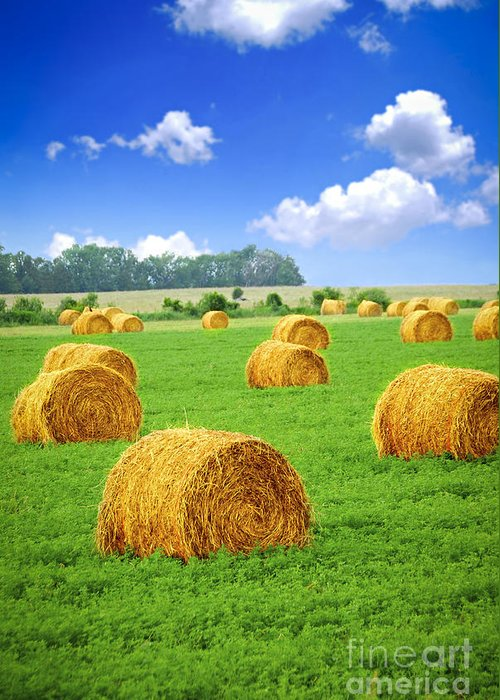 Agriculture Greeting Card featuring the photograph Golden Hay Bales In Green Field by Elena Elisseeva