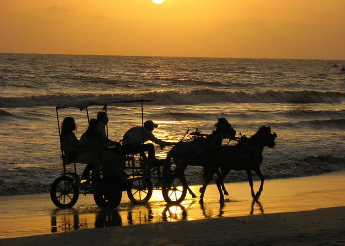 Horse Greeting Card featuring the photograph Golden Rides by Kanan Trivedi