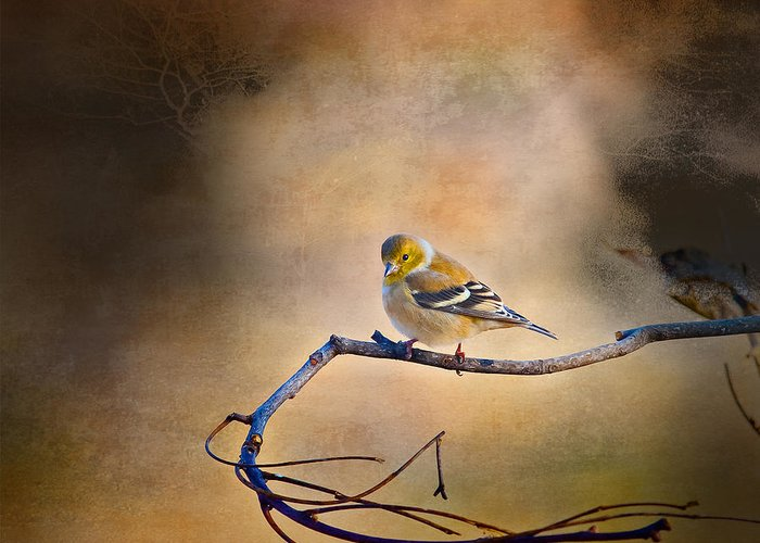 J Larry Walker Greeting Card featuring the digital art Goldfinch In Deep Thought by J Larry Walker