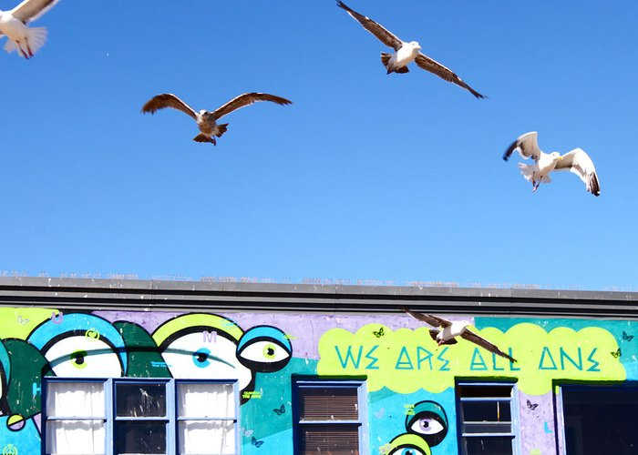 Seagulls Greeting Card featuring the photograph Good Vibes At Venice Beach by Casey Berger