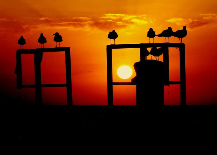 Key West Sunsets Greeting Card featuring the photograph Goodnight Gulls by Karen Wiles