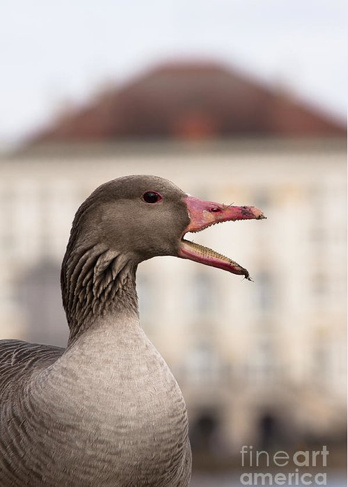 Bavaria Greeting Card featuring the photograph Goose At Nymphenburg Palace by Andrew Michael