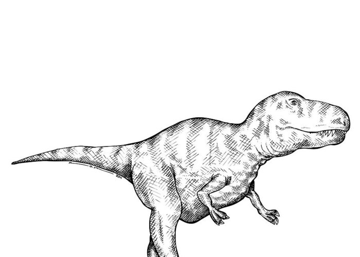Cartoon Greeting Card featuring the drawing Gorgosaurus - Dinosaur by Karl Addison