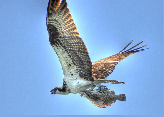 Great Blue Heron Greeting Card featuring the digital art Got It by Barry R Jones Jr