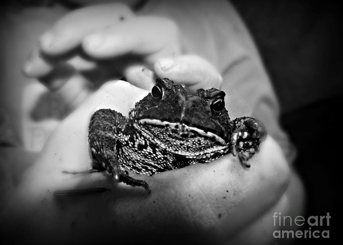 Toad Greeting Card featuring the photograph Got Ya by Christy Beal