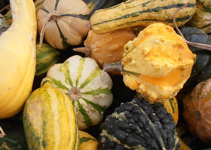 Gourds Greeting Card featuring the photograph Gourds by Kimberly Perry