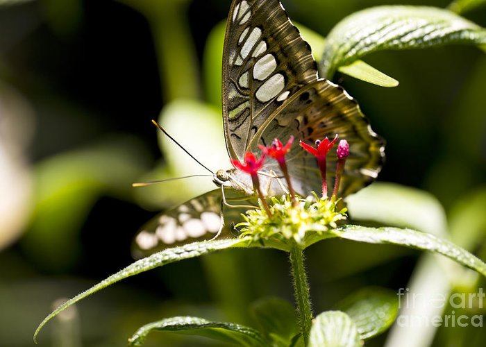 Butterfly Greeting Card featuring the photograph Graceful by Leslie Leda