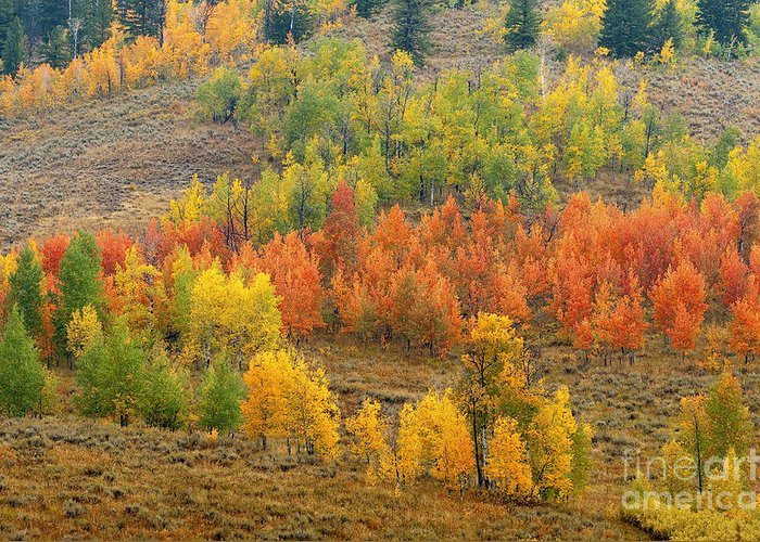 Bronstein Greeting Card featuring the photograph Grand Teton Fall Color by Sandra Bronstein