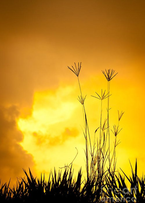 Silhouette Greeting Card featuring the photograph Grass Silhouette by Johan Larson