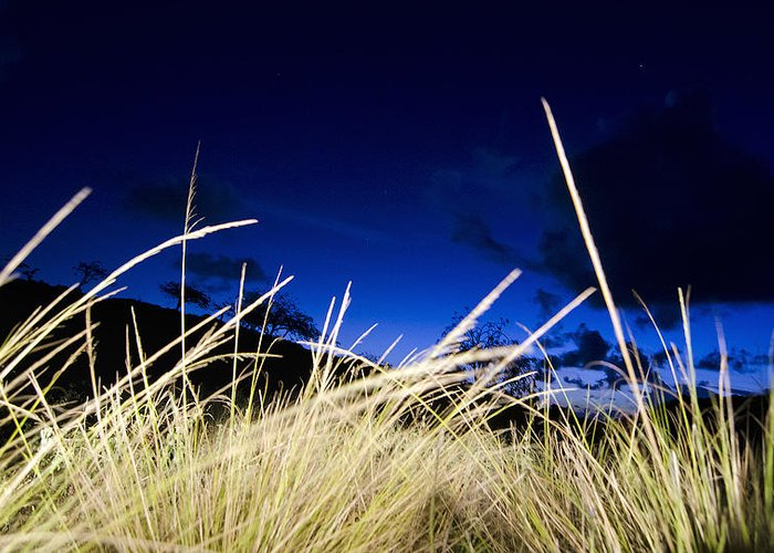 Greeting Card featuring the digital art Grasses by Dexter Fassale