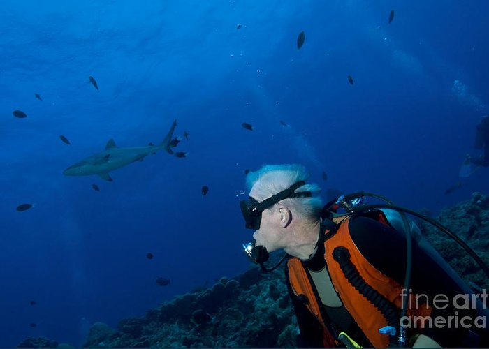 English Reef Greeting Card featuring the photograph Gray Reef Shark With Diver, Papua New by Steve Jones