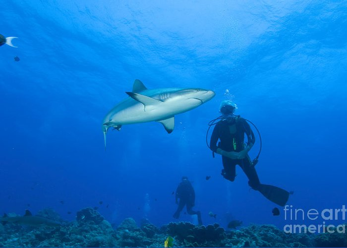 English Reef Greeting Card featuring the photograph Gray Reef Shark With Divers, Papua New by Steve Jones