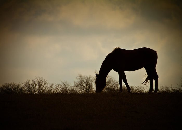Grazing Greeting Card featuring the photograph Grazing by Paul Roach