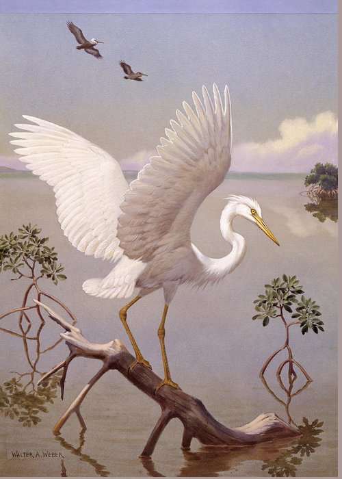 Illustration Greeting Card featuring the photograph Great White Heron, White Morph Of Great by Walter A. Weber