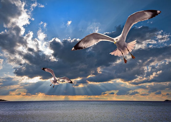Gull Greeting Card featuring the photograph Greek Gulls With Sunbeams by Meirion Matthias
