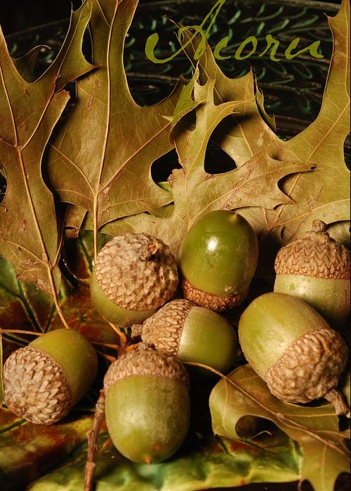 Word Greeting Card featuring the photograph Green Acorns And Oak Leaves by Jennifer Holcombe