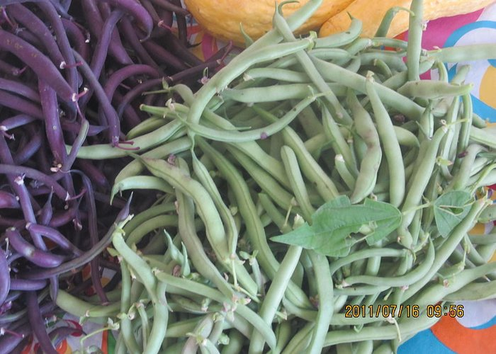 Greeting Card featuring the photograph Green And Purple Beans by Tina M Wenger