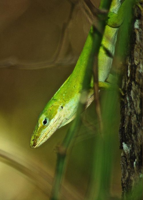 Anole Greeting Card featuring the photograph Green Anole 8709 3520 by Michael Peychich