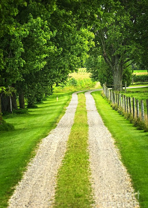 Farm Greeting Card featuring the photograph Green Farm Road by Elena Elisseeva