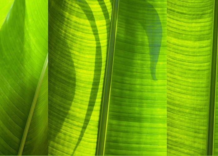 Abstract Greeting Card featuring the photograph Green Leaf by Setsiri Silapasuwanchai