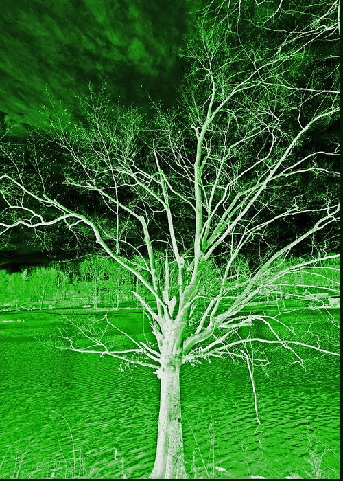 Tree Greeting Card featuring the photograph Green Magic Tree by Sheila Kay McIntyre