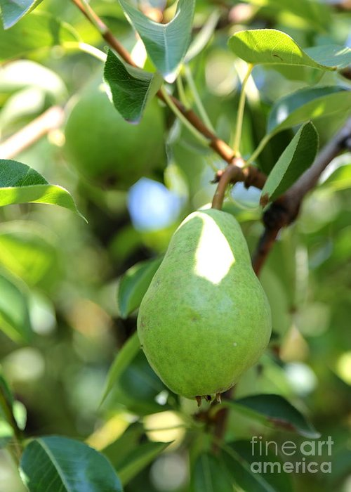 Pear Greeting Card featuring the photograph Green Pear by Carol Groenen