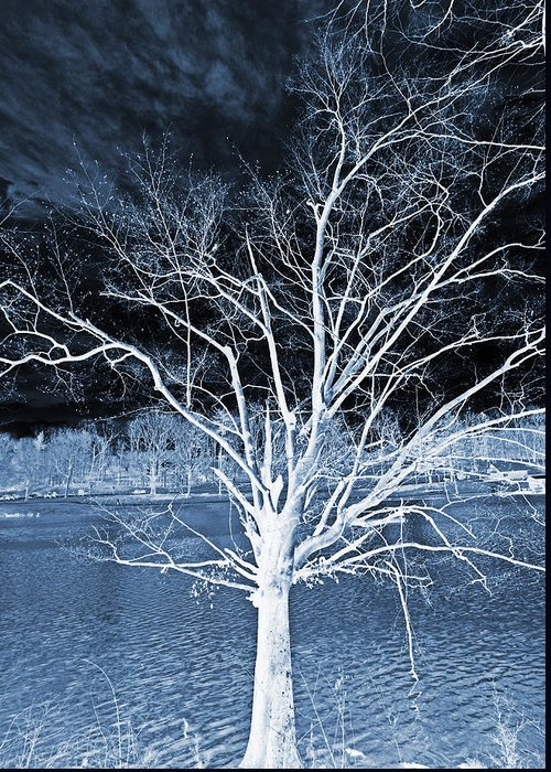Tree Greeting Card featuring the photograph Grey Magical Tree by Sheila Kay McIntyre